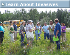 Learn About Invasives